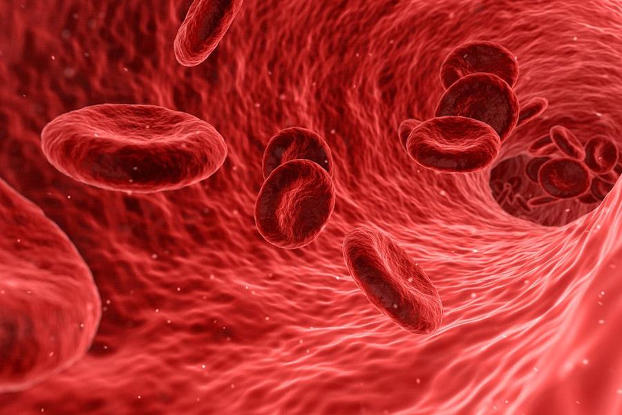 Model of blood platelets