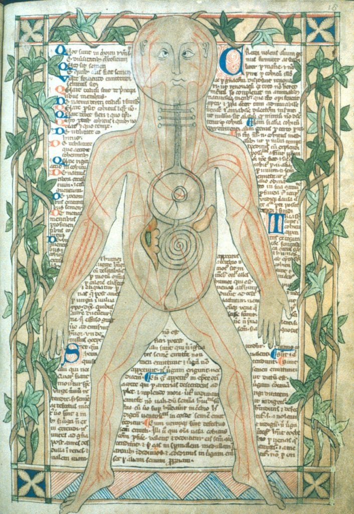 13th century medical anatomy chart showing origins of medical terminology